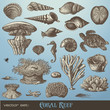 vector set: coral reef - variety of sea-design elements - 24694333