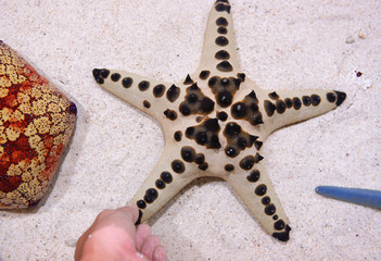 touch star fish
