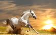 Fototapeten,pferd,sonnenuntergang,biest,staub