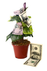 money tree and dollars