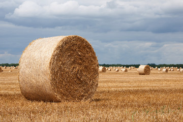 cornfield bale of straw