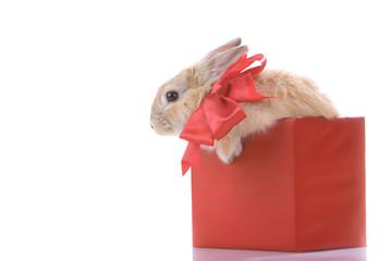 Rabbit in box