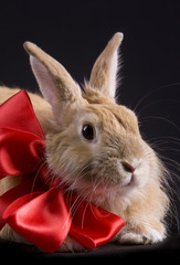 Rabbit with bow