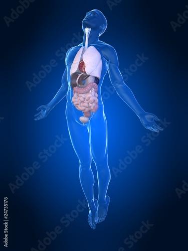 GamesAgeddon - männliche Anatomie mit Organen - Lizenzfreie Fotos ...