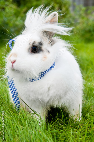 white rabbit on green grass