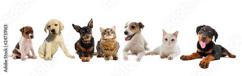 jeunes chiens et chats