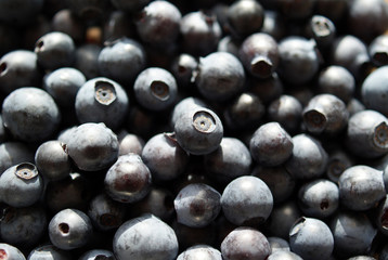 Bilberry Background (Vaccinium myrtillus)