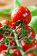 Beautiful cherry tomatoes on the vine