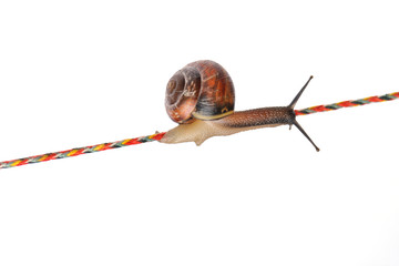 Snail on rope