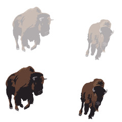 American bison galloping, two color versions