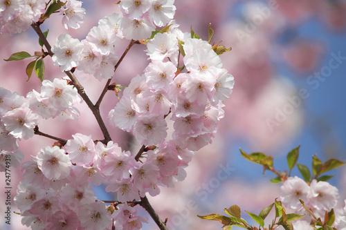 oddzialy-z-blekitne-niebo-oddzialow-kwiat