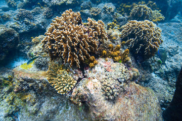 Coral reef under Andaman sea at Similan Island Thailand