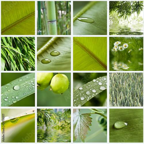 Papiers peints Bambou compositio nature