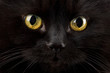 eyes of black cat