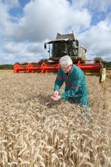Farmer standing in wheat field during harvest season