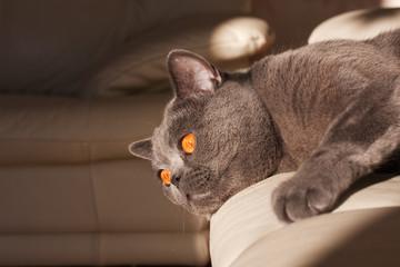 Faul auf der Couch liegen