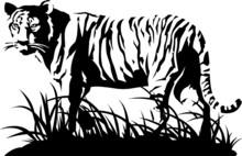 Tigre noir et blanc. Vecteur