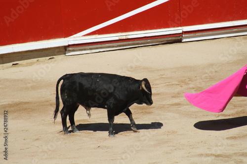 Staande foto Citando al toro, plaza de ventas de Pamplona, San Fermín.