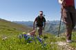 Alpenpanorama mit Enzian