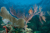 Sea Fan and Sea Rod