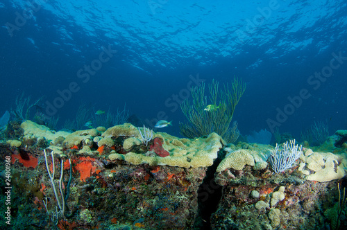 Coral Ledge Compostion