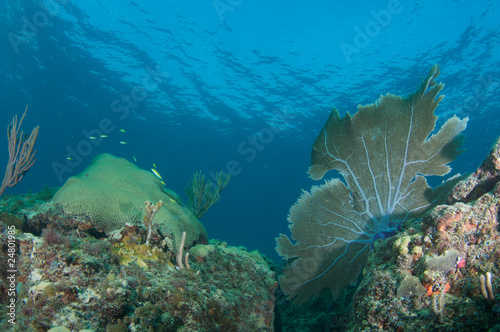 Coral Reef Composition