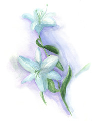 watercolor illustration - flower