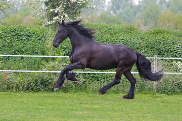side view of a beautiful horse running free