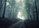 man walking in a green forest with fog - Fine Art prints