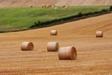 Circular Bales of Hay in an English meadow