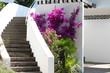 Treppe inmitten von Bourgonvillea, Lavendel und Palmen