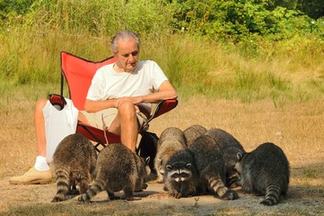 Old man and the raccoons