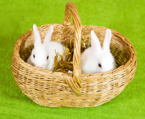 Two  rabbits in basket