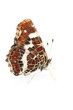 Map butterfly (Araschnia levana) over white background