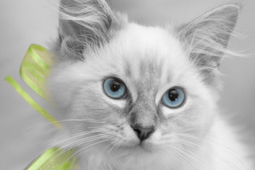 colour splash kitten