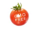 gmo free tomatoe poster