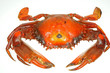 Steamed Crab On White Background