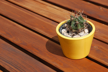 Yellow flowerpot with cactus on the empty wooden picnic table