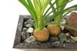 Plante sur lit de galets