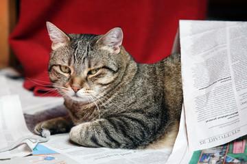 Kater unter Zeitung versteckt