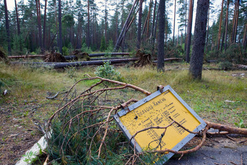 """Consequences of hurricane """"Asta"""", Russia."""