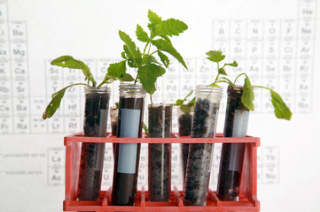 Botanical research, plants growing in test tubes