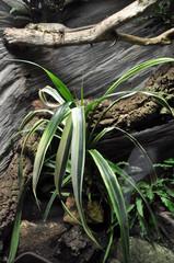 reptile terrarium