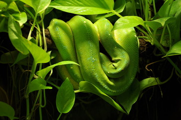 snake in jungle