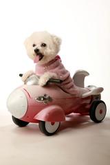 cute dog photos