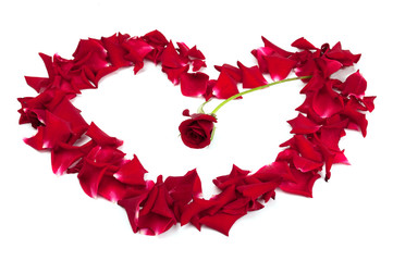 red roses and rose petals