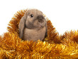 Dwarf rabbit in the Christmas tinsel.