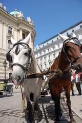 Fiaker Wien