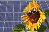 Solar moduls and sunflower poster