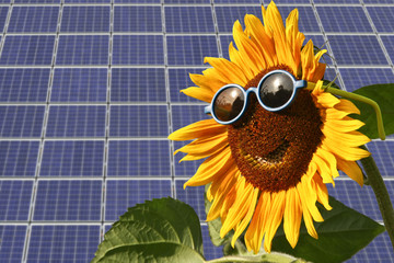 Solar moduls and sunflower